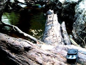HP Hilang di Tengah Hutan