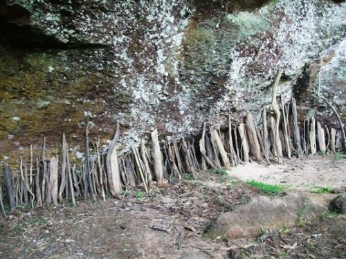 23 twigs